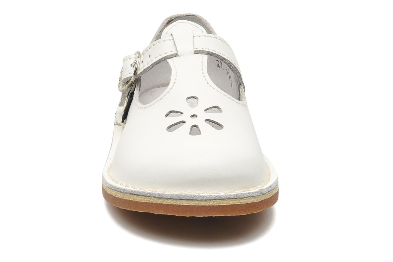 Dingo Blanc
