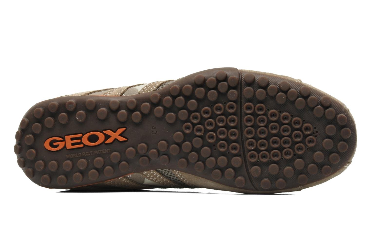 Trainers Geox U SNAKE L U4207L Beige view from above