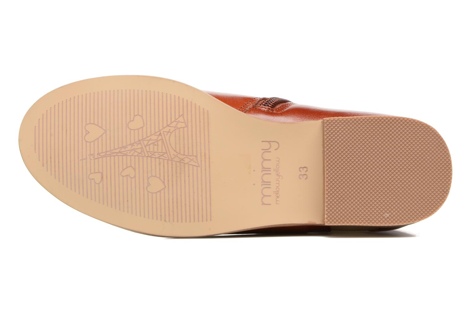 Mnceano Camel